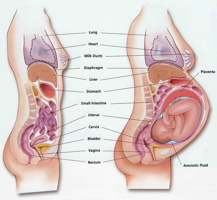 absolutely love this diagram. shows pregnant body/anatomy/organs
