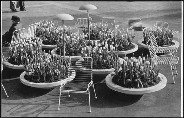 Exterior view of part of the Festival of Britain site 1951, showing 'Antelope' and 'Springbok' chairs designed and made by Ernest Race Ltd