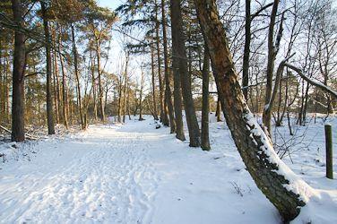 *Warm wandelen in de winter* De winter komt eraan! We geven tips over hoe je je goed kunt kleden in de koude dagen zodat je comfortabel kunt wandelen en genieten van het moois in dit seizoen.