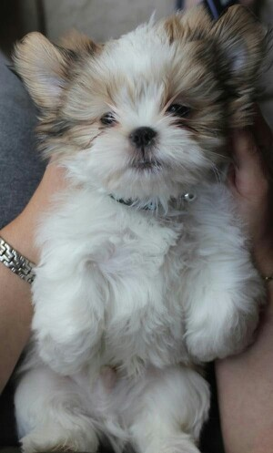 This is what my little Jazzie looked like when he was just three months old. So cute.