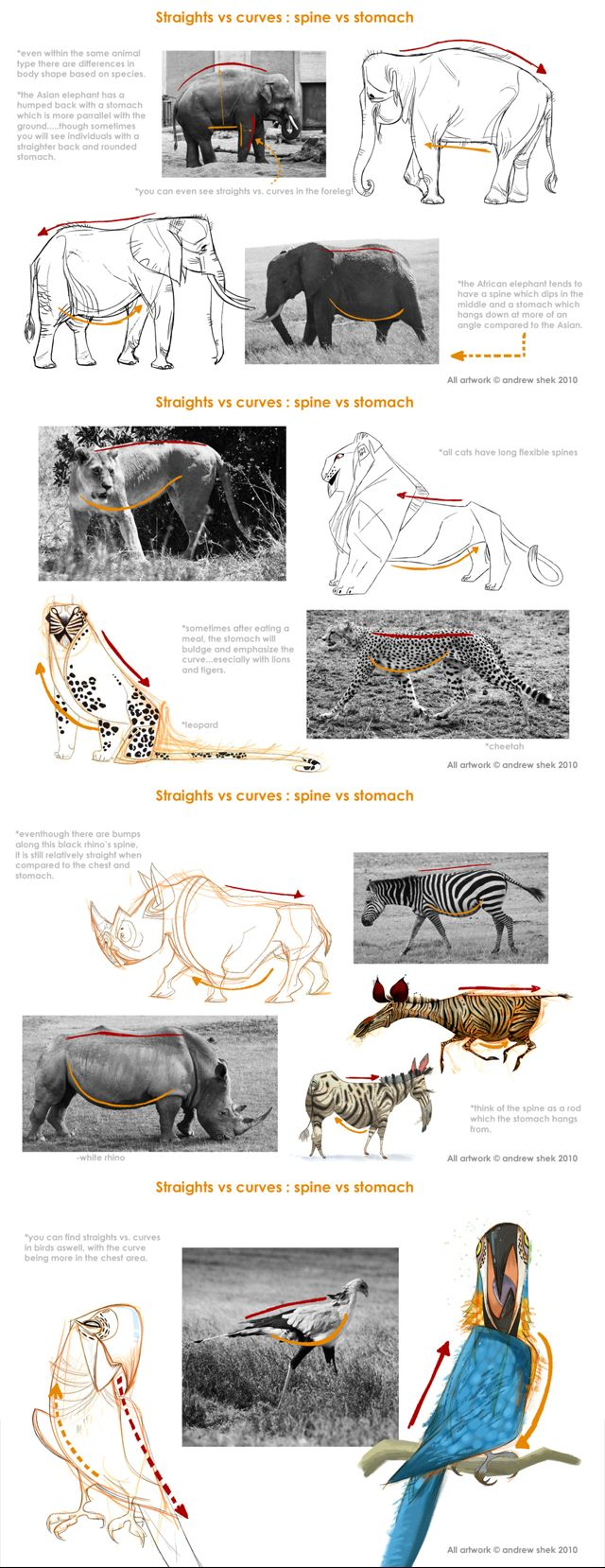 Andrew Shek: straights vs. curves in animals. Designing animal characters.