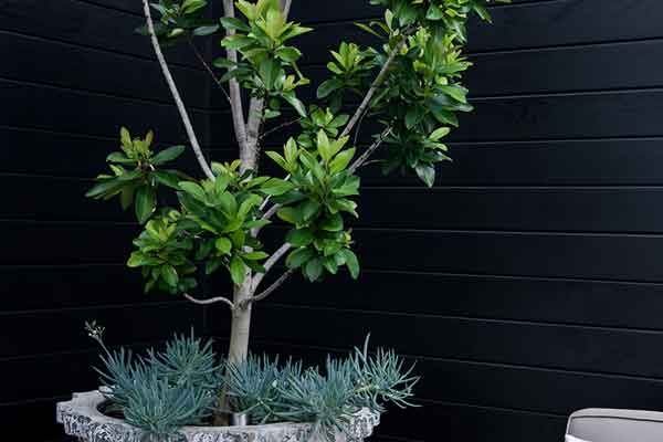 Let's Go Tree Potting Add a beautiful feature to your garden…