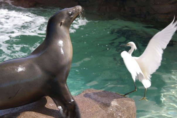Sea lion vs. bird!
