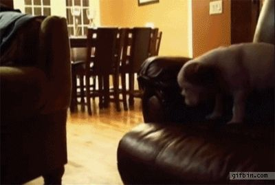 21 Best GIFs of All Time of the Week #41