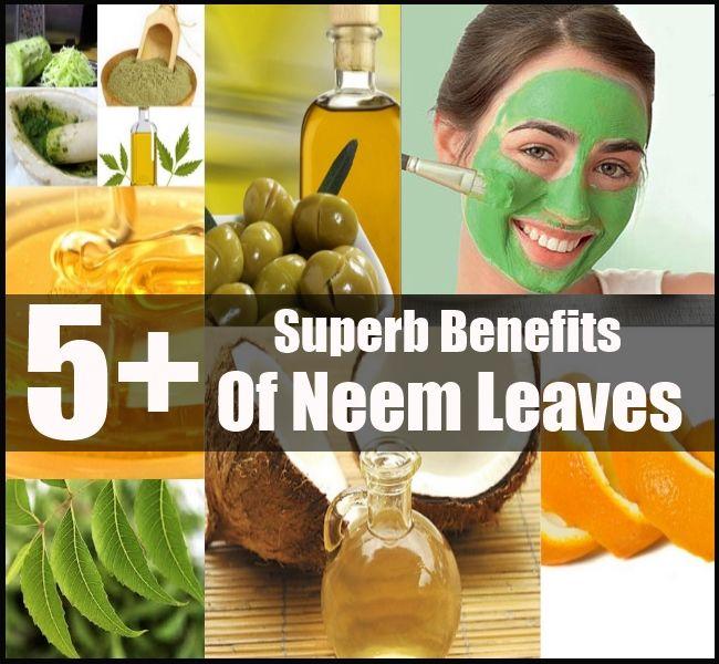 Benefits Of Neem Leaf
