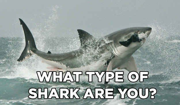 What type of shark are you?  I got hammer head!