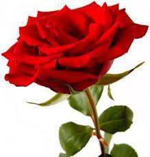 Zzp'er  - Thuis werkend  - De geur snuivend -  Van de rozen in huis   - Luuk van Term -------------------------------------------------- Genoten, van de natuur: een werkwoord, maar was het ook werken? #elfie14 #feteNL