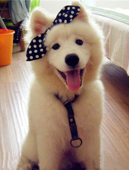 So adorable!!: Happy Faces, Cute Animal, Dogs Bows, Polka Dots, Cutest Dogs, Baby Girls, Hair Bows, Dogs Rules, Fluffy Puppies