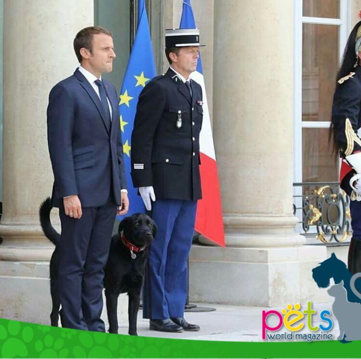 """Emmanuel Macron adopta un perro y lo llama Nemo  El presidente francés, Emmanuel Macron, adoptó este fin de semana, en un refugio de la Sociedad Protectora de Animales, a un perro cruce de raza Labrador y Grifón al que ha bautizado como Nemo.  El nuevo animal de compañía del Elíseo recibió su nombre en honor del capitán Nemo, célebre personaje de la novela de Julio Verne """"Veinte mil leguas de viaje submarino"""", por la que Macron siente una especial predilección."""