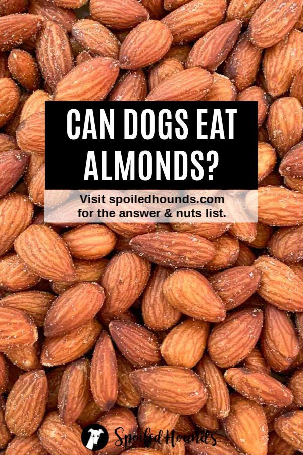 Nuts Dogs Can Eat and Nuts Harmful to Dogs Spoiled