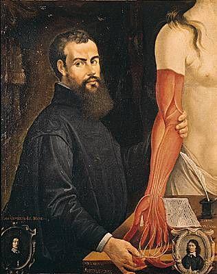 André Vésale AndréVésale, anatomiste flamand. Peinture de Pierre Poncet. (Musée des Beaux-Arts, Orléans.)