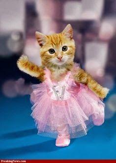 Ballerina Kitty :P