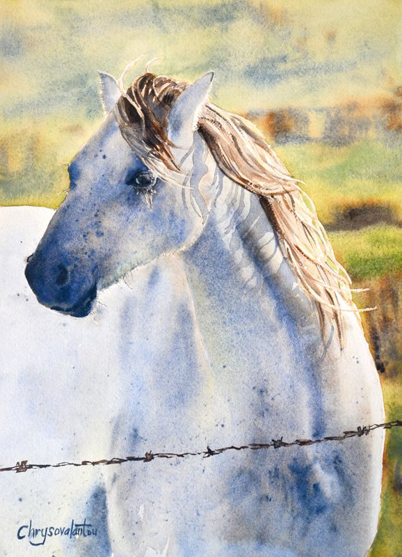 Painting of Horse in Watercolour