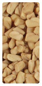 Fenugreek seeds exporters