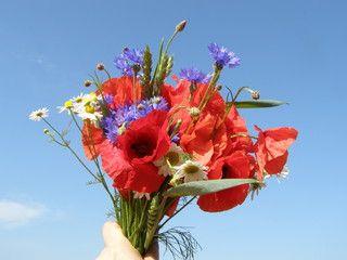 Kwiaty Polskie Flowers Ikebana Flora