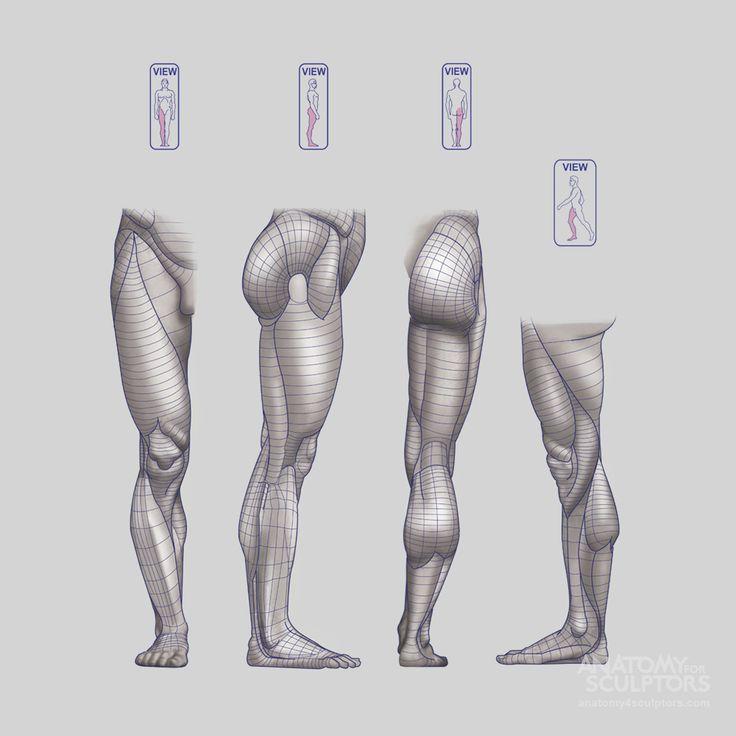 leg muscles drawing - photo #44
