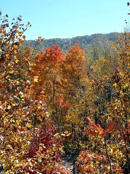 Fall leaves - #WordlessWednesday #LiNKY - Frunze de toamna