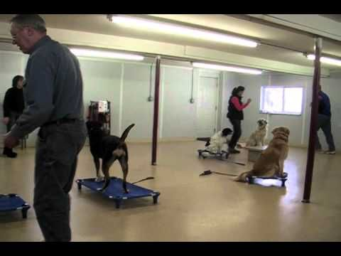 Remote Collar Training Basic Dog Obedience - http://www.7tv.net/remote-collar-training-basic-dog-obedience/