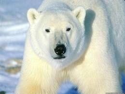 animal peligro de extinción :(