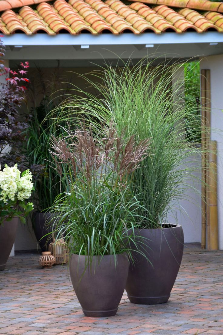 Plant a pot of grasses to put on left side of shed