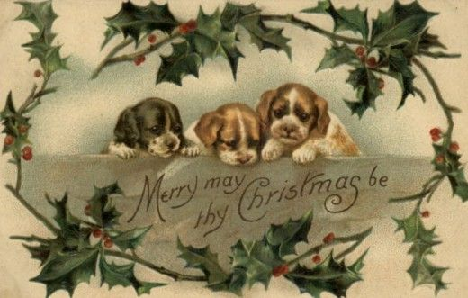 Holly Puppies - Vintage Christmas Images | Public Domain | Condition Free By Nancy Oram