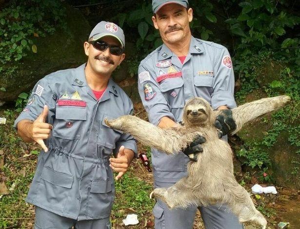 """""""Como uma deusa"""": bicho-preguiça faz pose de diva após ser resgatado por bombeiros"""