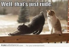 These Funny Cat Phot  These Funny Cat Photos provide that humour break for when …