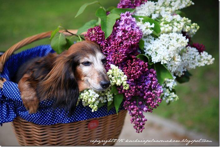 pies w koszyku (7)