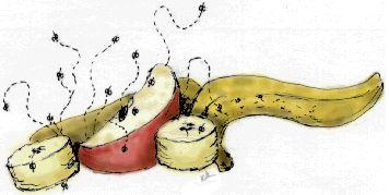 bottle biology - watch life cycle of fruit flies