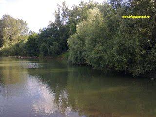 Pescuitul sportiv - mai presus de pasiune: Spinning la clean: pescuit pe sub răchite