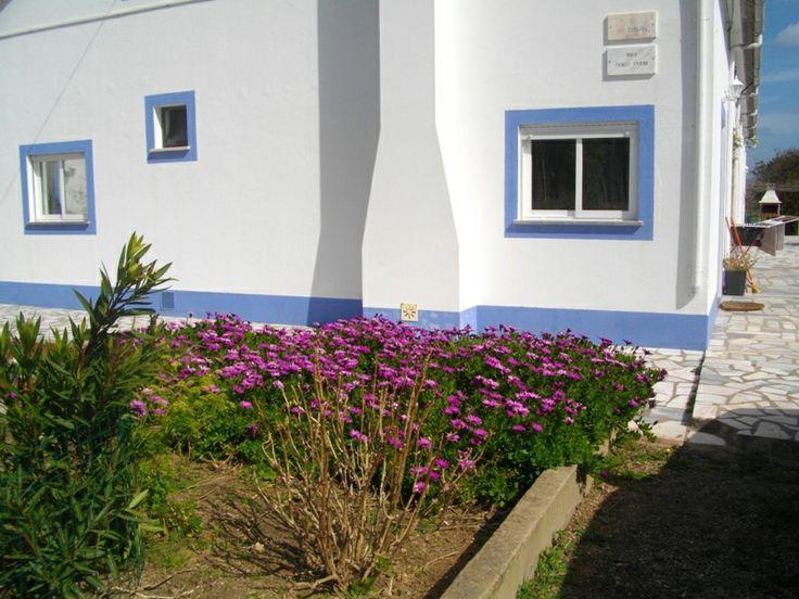 Flores do Monte na primavera https://www.facebook.com/AlmogPedrinhas