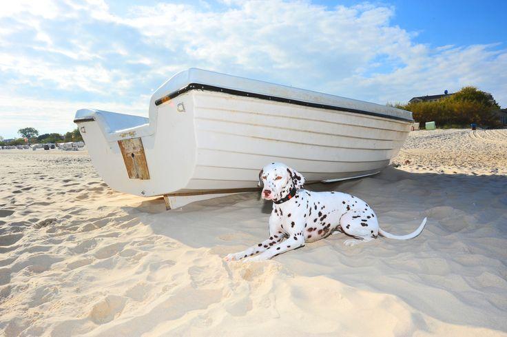 Der geliebte Vierbeiner soll im Urlaub schließlich nicht fehlen! #Travel #Sommer #holidays #Sun #Haustier ©SABINE_IMMKEN - Fotolia