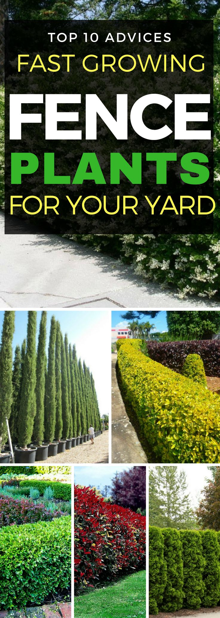 See if more than one of these is zoned 3, Colorado or Rocky Mountains 1. Bamboo 2. Privet 3. Boxwood 4. Arborvitae Cypress trees  7. Skip Laurel 8. Holly 10. Juniper