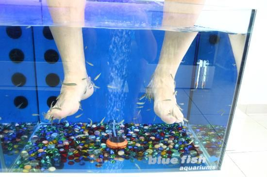16 best images about fish pedicure on pinterest trips for Fish pedicures illegal in 14 states