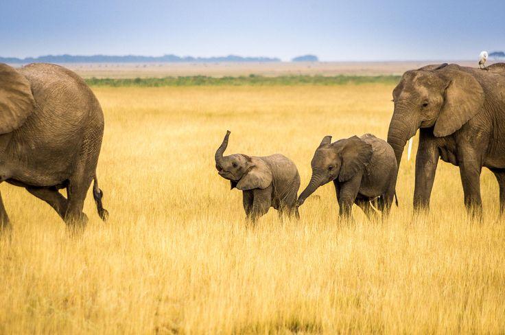 elefanten karawane by patrick baum my 500px pictures pinterest fotos. Black Bedroom Furniture Sets. Home Design Ideas