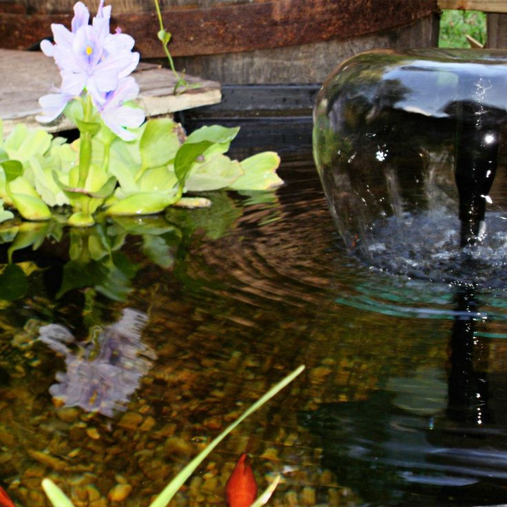 17 best images about cool ponds on pinterest gardens for Floating flowers in water