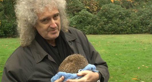 Brian May of Queen; Wildlife Refuge