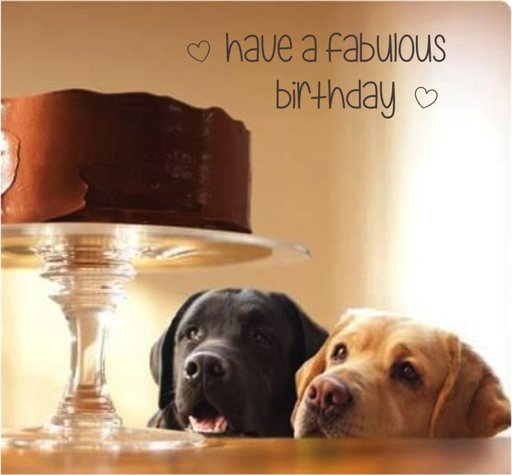 Image result for dog saying happy birthday