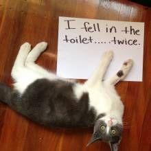 Hahahahaha, my cats fallen in the toilet before.