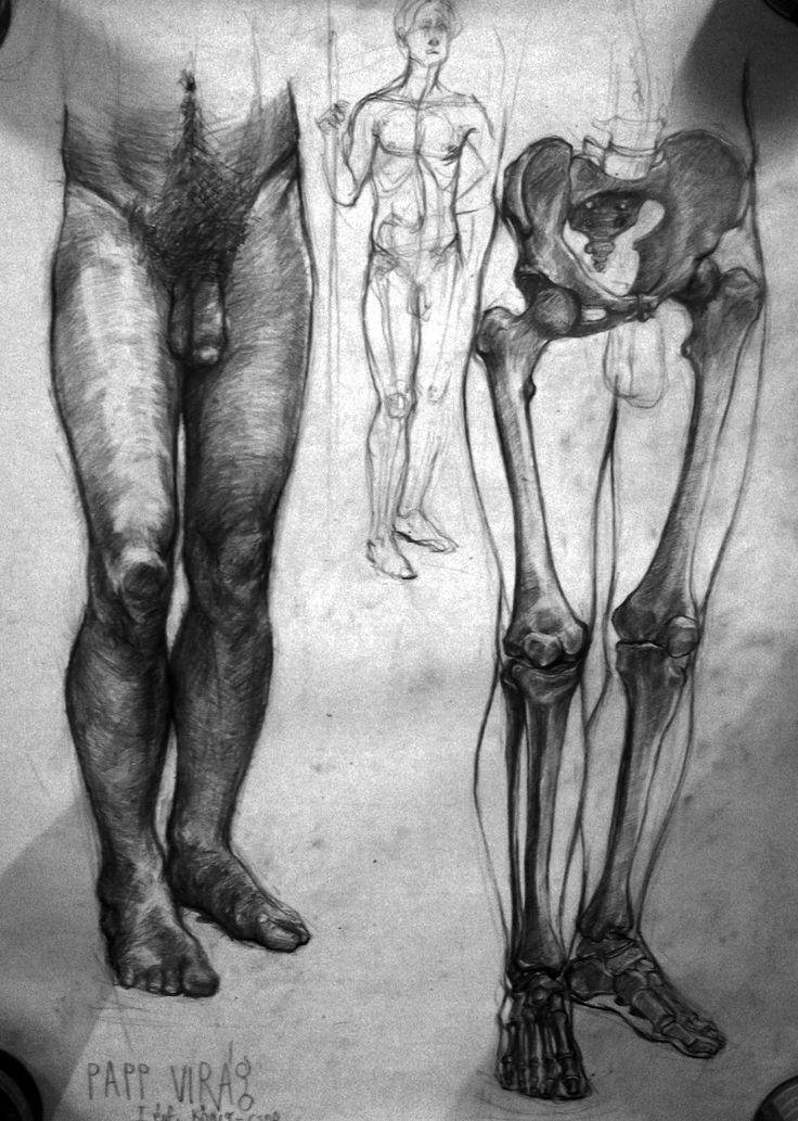anatomy study, graphite on paper Virag Papp, 2012 #anatomy #study #graphite