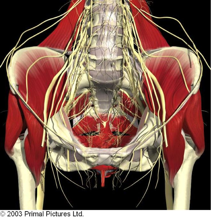 107 Best Anatomie Images On Pinterest Physical Therapy Health And