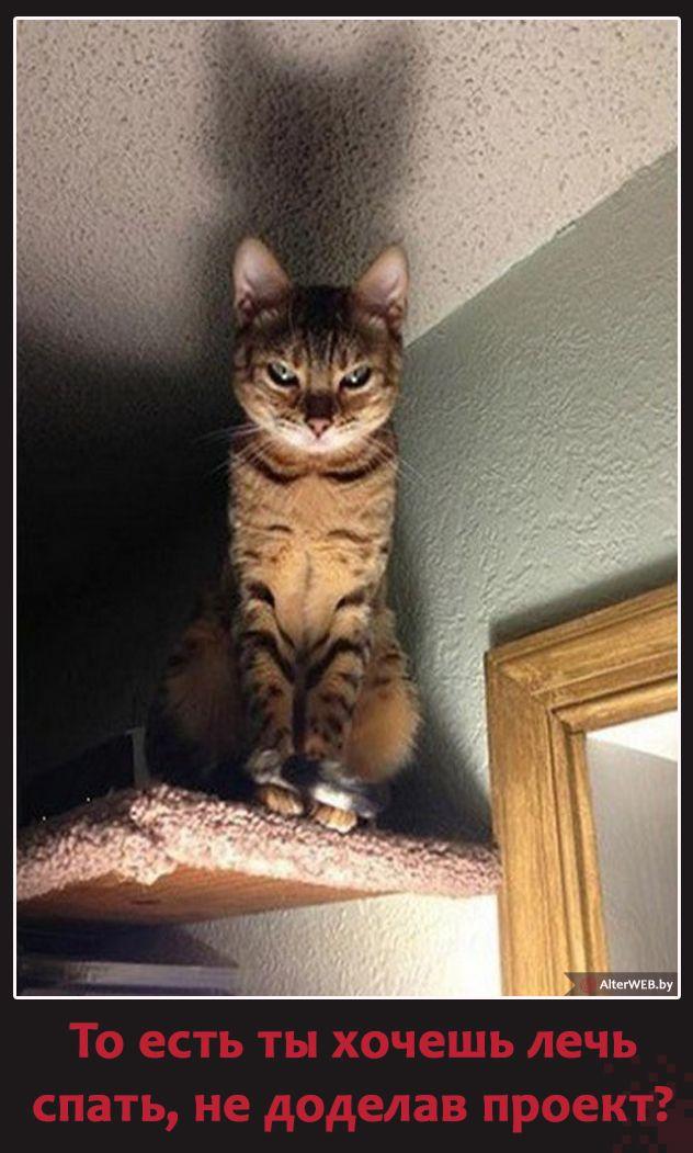 То есть ты хочешь лечь #спать, не доделав #проект ?  #юмор #кот #коты #котэ #вебразработка #проектирование #работа #вебмаркетинг