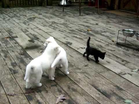 Home - Cute Psi, Cute Štěňata, Tančící psi, Zábavné Štěňata | Dance With Izzy!