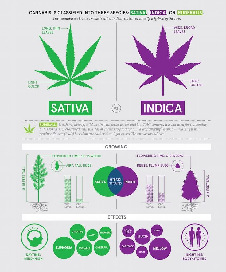 Difference Between Indica And Sativa Marijuana Strains