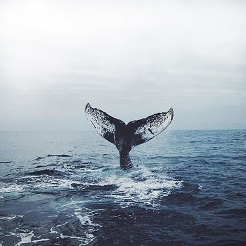 Whale whale whale, what do we have here