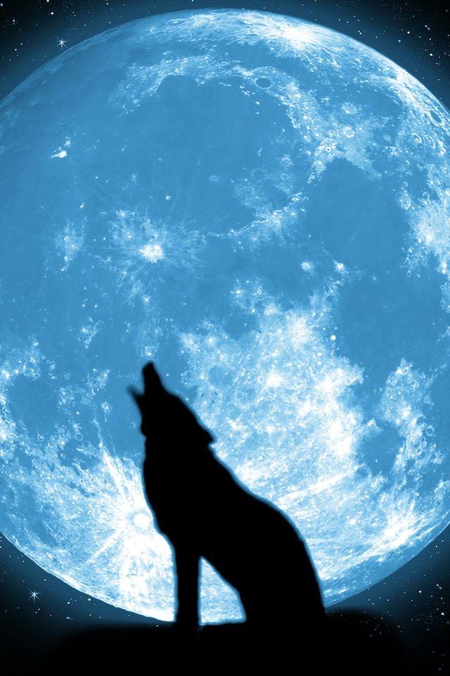Blue Wolf Wings