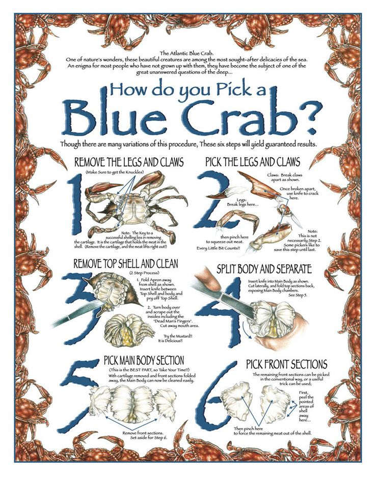 How to Pick a Blue Crab by pencil artist Jon Brown. Each Marylander swears by their method of picking their steamed crabs.  After all, we learned from parents and family.  Some folks even learned from professional crab pickers using a tradition of years past.  Using this guide, you'll soon be picking, eating, drinking and chatting all at the same time, too! Buy a print of this image:  http://www.jwbartunlimited.com/products/how-to-pick-a-blue-crab   $29