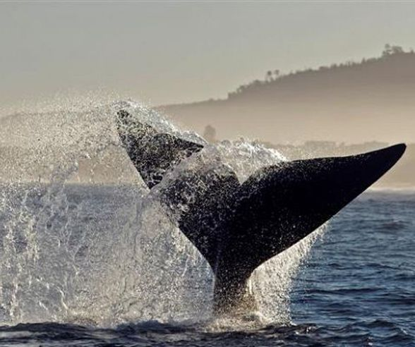 Grab your binoculars and experience some of the best land-based whale-watching in the world in Hermanus.
