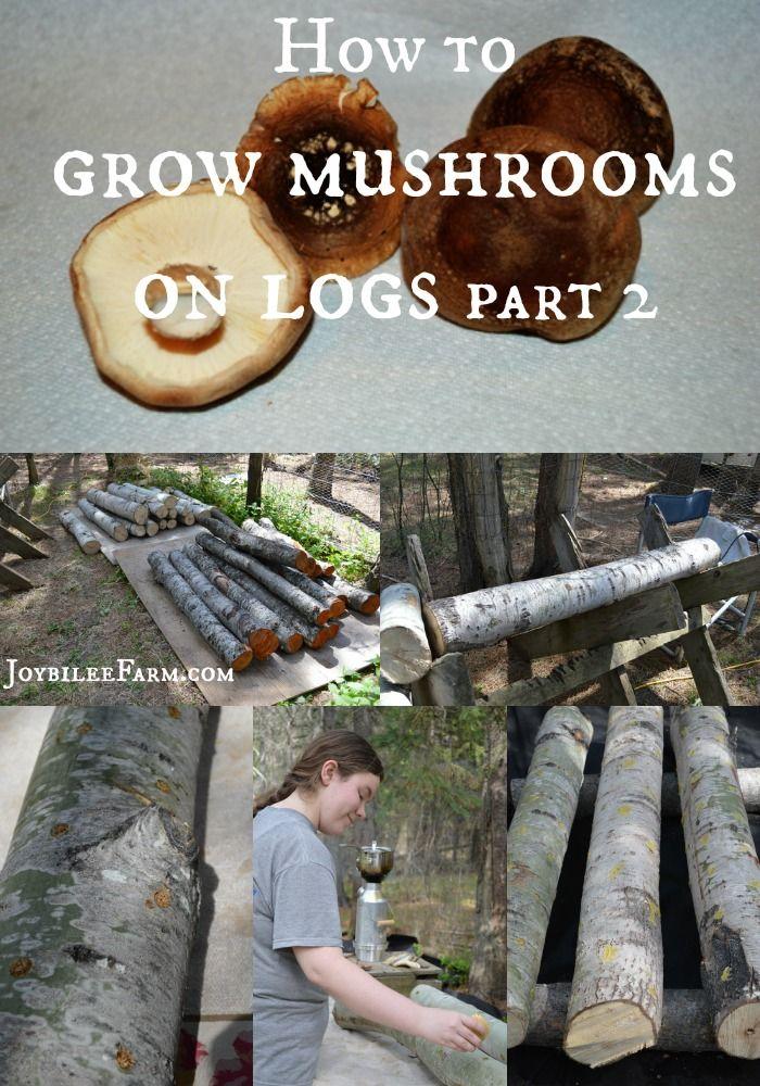 How to grow mushrooms on logs Part 2 -- Joybilee Farm