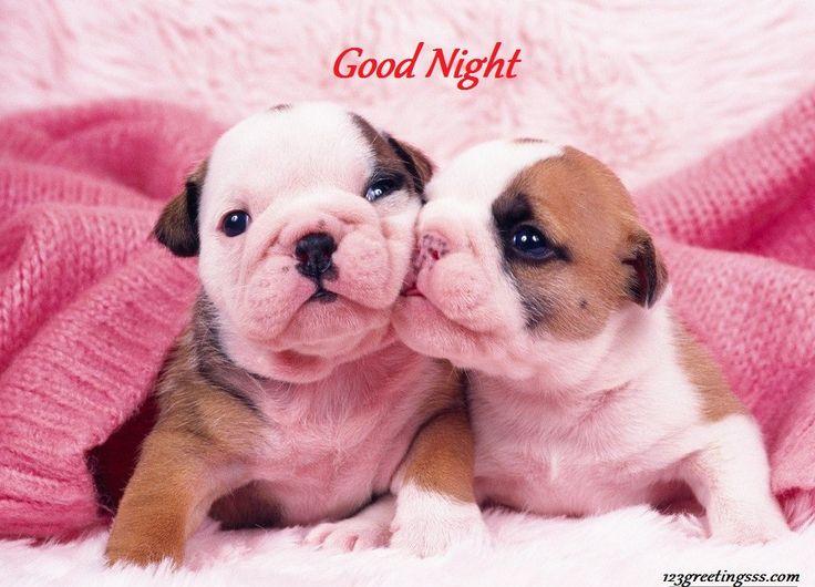 good-night-dog.jpg (1024×738)